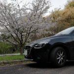 2018桜 Drive